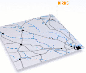 3d view of Birds