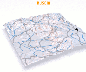 3d view of Muscia
